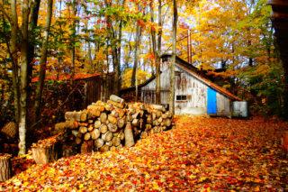 La cabane à sucre, en automne | Terra Sativa