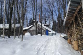 La cabane à sucre, en hiver | Terra Sativa